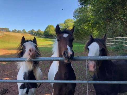Mare and Foal Sanctuary: Icon (middle) with new herd mates (L2R) Ovie and Tinkerman