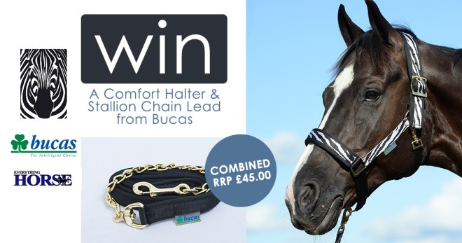 Comfort Halter and Stallion Chain Lead from Bucas