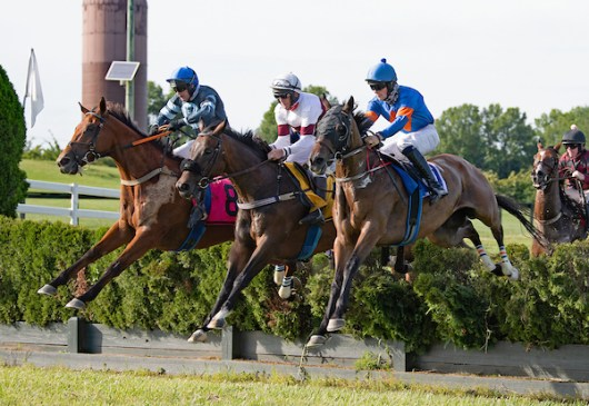 National Steeplechase Association - Image Elmutahid (center) Cheetah Beach (left) Good and Proper take jump early in 10th