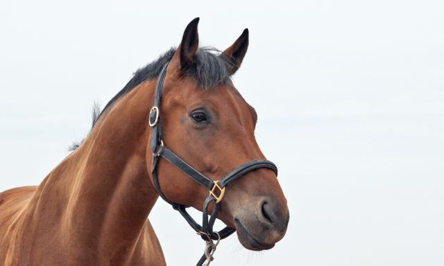 Horse Calmer