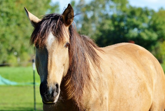 Natural Horse Supplements UK image of horse in paddock