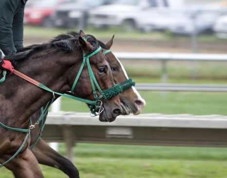 horses-track-race-horse-racing
