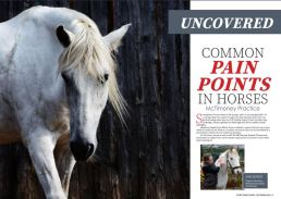 common pain points in horses everything horse magazine