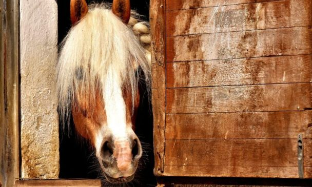 Horse Mirrors: Do They Work?