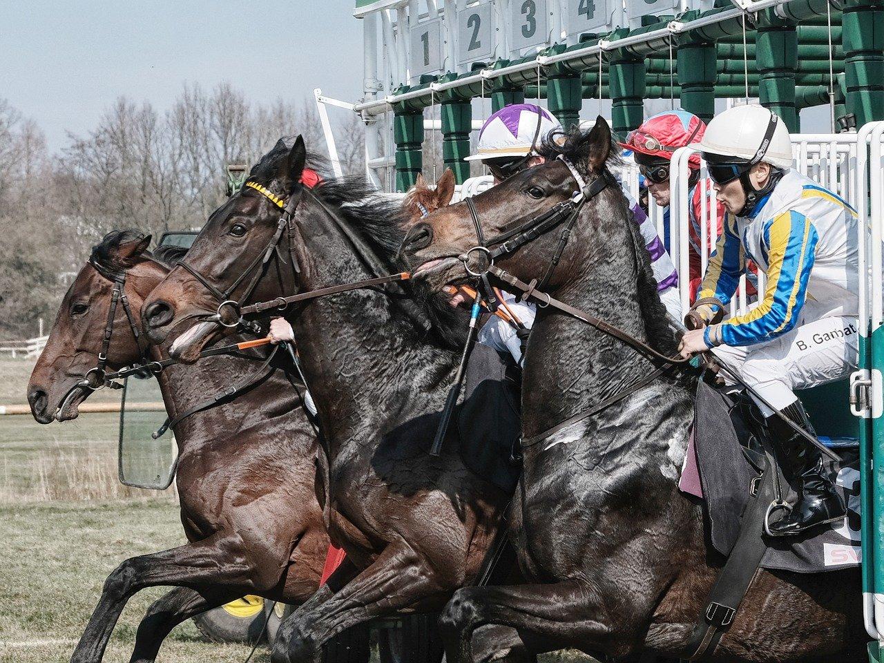Horse Racing in Gulfstream Park