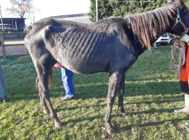 horse welfare, RSPCA rescue horses while owner given suspended jail sentence