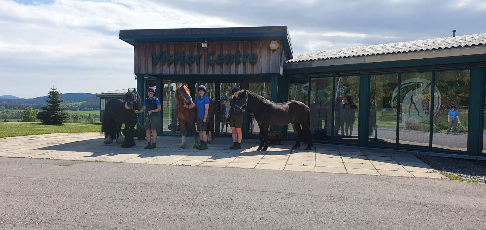 Belwade World Horse Welfare Rescue and Rehoming Centres - Visitor Centre