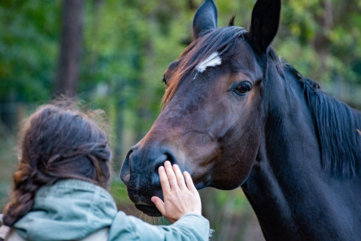 Horses Can Tell If You Are Untrustworthy, New Study Finds