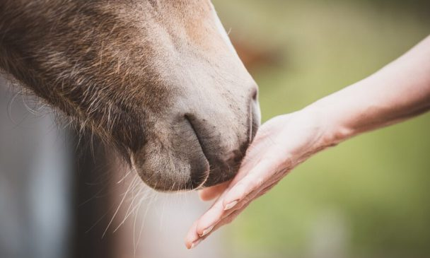 Equine Therapy Helpful for PTSD in Veterans, New Study Finds