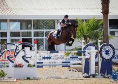 Irish bred horses shine at the Sunshine Tour