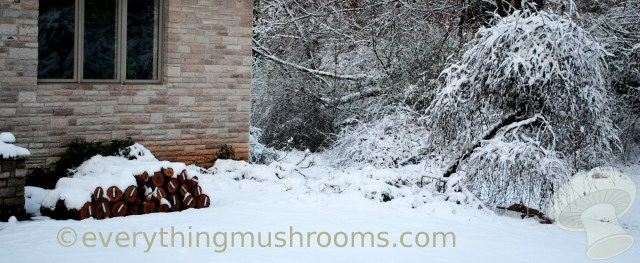 temporary-stacking-of-logs-in-snow.jpg