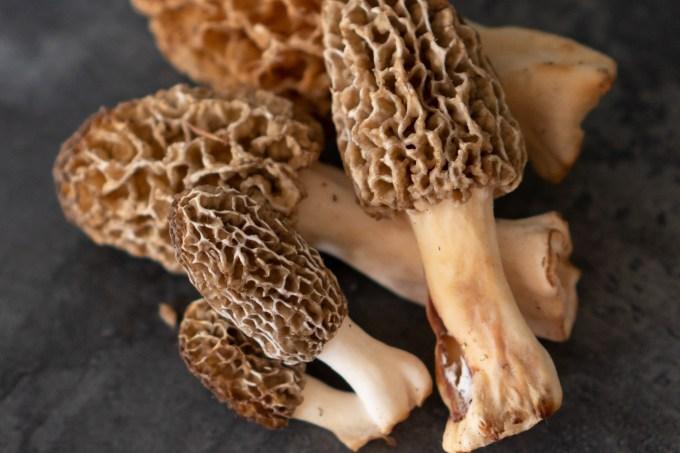 Making a simple mushroom grow chamber – Everything Mushrooms