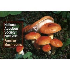 Mushroom Identification