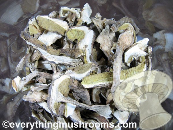 Porcini Mushrooms, Cèpe, Boletus edulis - bulk price/ounce