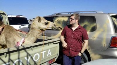 Kamel auf Fähre nach Masirah Island im Oman