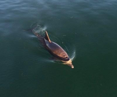 Key West, Dolphin