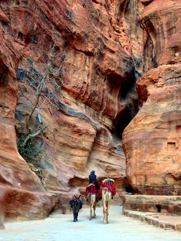 Kamelreiter im Siq in Petra