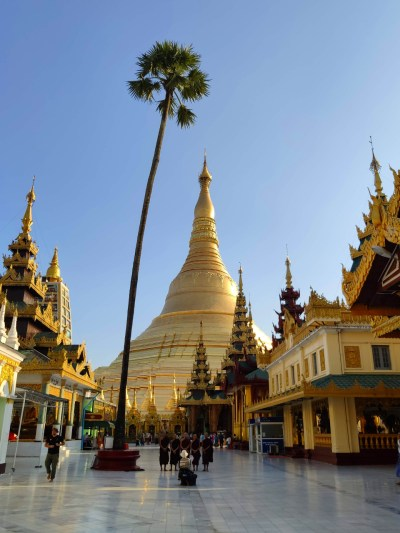 Palme in der Shwedagon