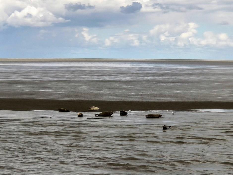 Seehundbänke bei Cuxhaven