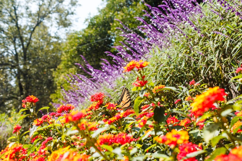 Backpacking Mexico City Travel Tips: Visiting the Chapultepec Park Botanical Gardens
