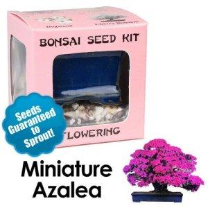 Miniature Azalea Bonsai Seed Kit
