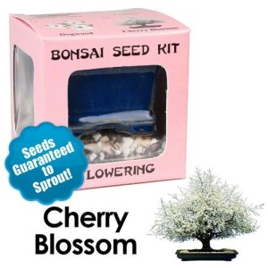 Cherry Blossom Seed Kit
