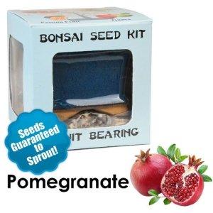 Pomegranate Bonsai Seed Kit