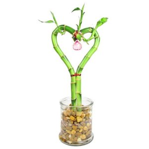 Heart Lucky Bamboo in Round Clear Glass Vase