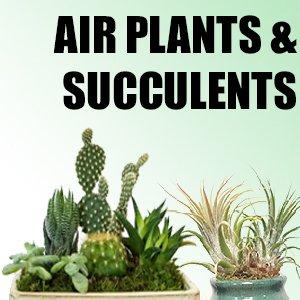 Air Plants & Succulents