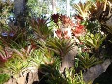 my aunt's plants