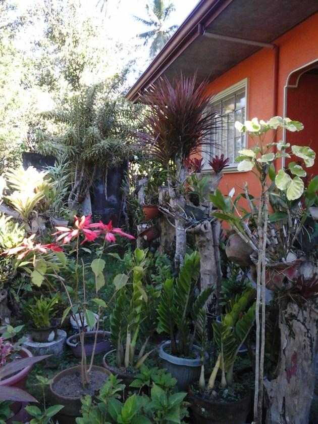 my aunt's place
