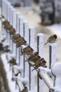 Birds on a fence in a winter landscape