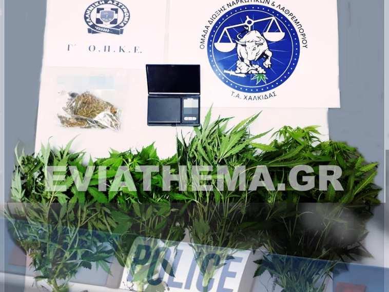 Σύλληψη_Ναρκωτικά_Ιστιαία