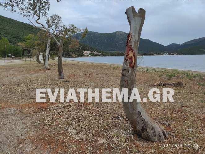 Εύβοια: Οι αυθαιρεσίες τοπικού προέδρου
