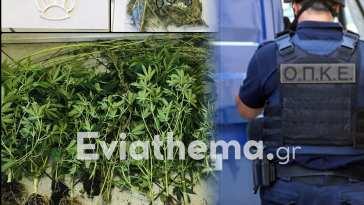 Χαλκίδα Ευβοίας: Συνελήφθη 50χρονος για ναρκωτικά και οπλοκατοχή
