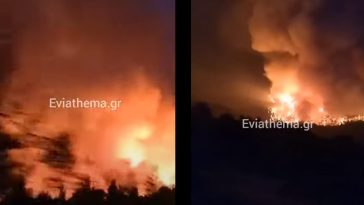 φλόγες στο Αγριοβότανο