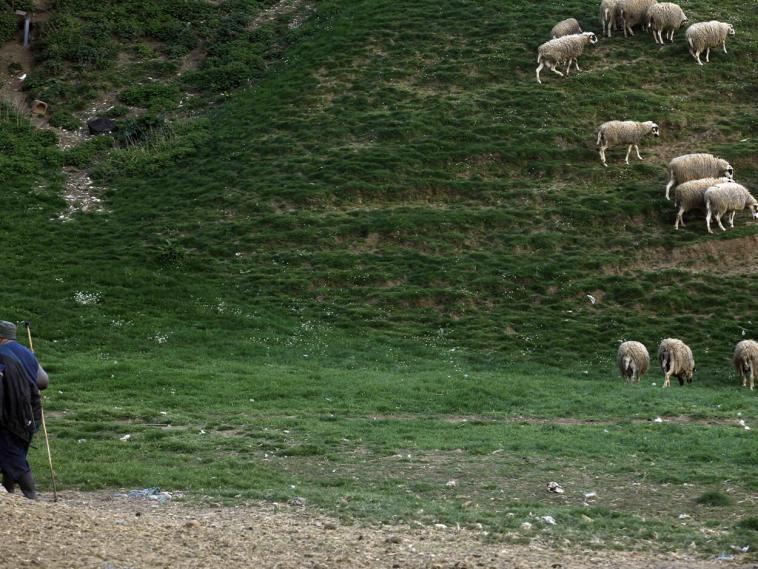 Φθιώτιδα: Νεκρός αγνοούμενος βοσκός