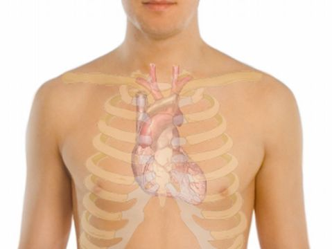 Anatomical overlay of heart location on a human body