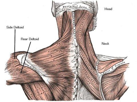 shoulder training 3