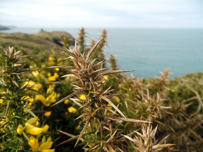 3 jours au Pays de Galles : Itinéraire et avant-goût