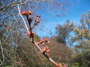 Chroniques Anglaises #14 : Le printemps arrive !