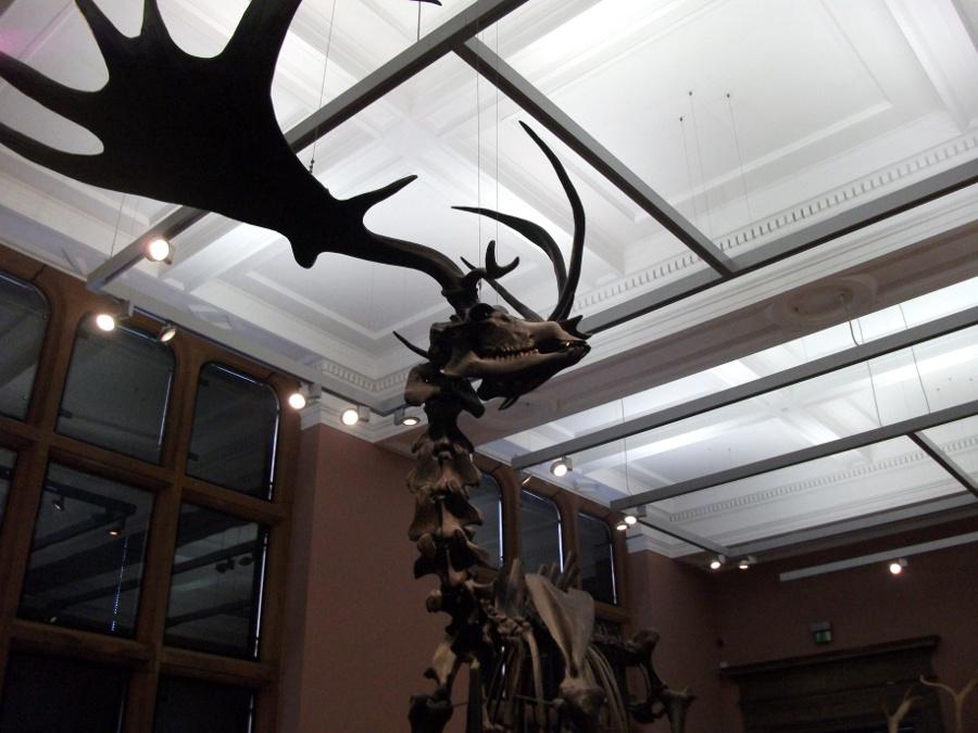 Errances au Kelvingrove Museum