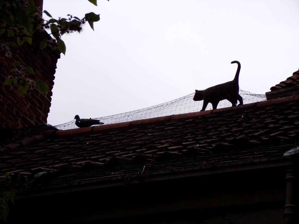 Le fabuleux York Cat Trail