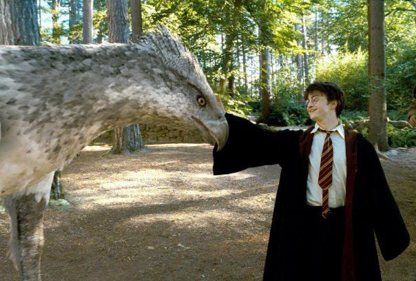 harry and hippogriff