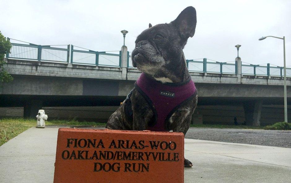 "Fiona, the ""Ambassador of E'ville"""