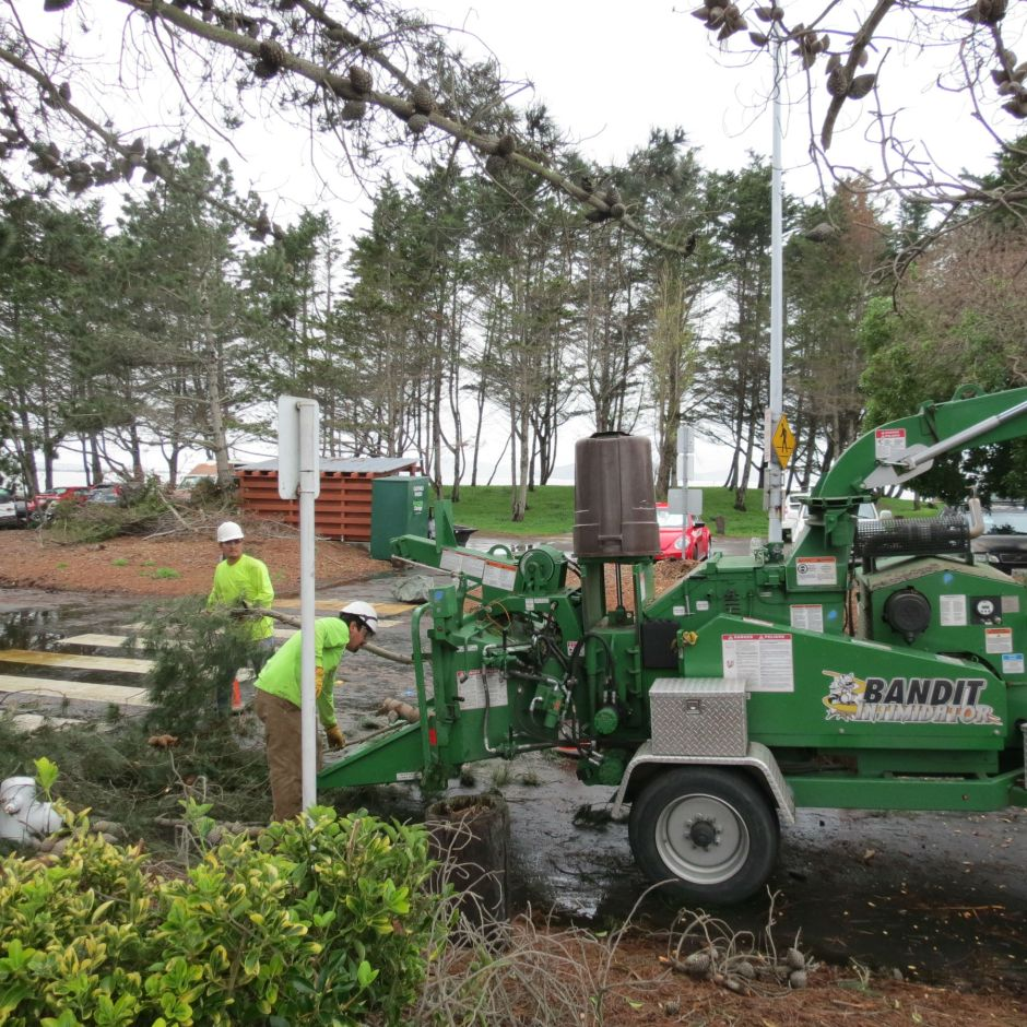 Tree Service loads the pine branches into the chipper at the marina.