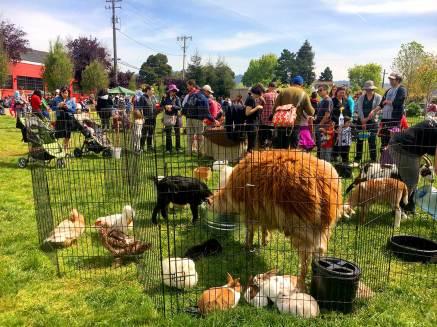 emeryville-spring-carnival-egg-hunt-24