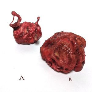 small sculptures of meat chunks