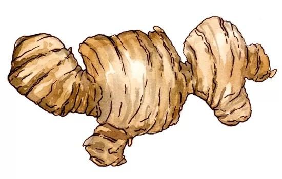 сontraindications-ginger-root