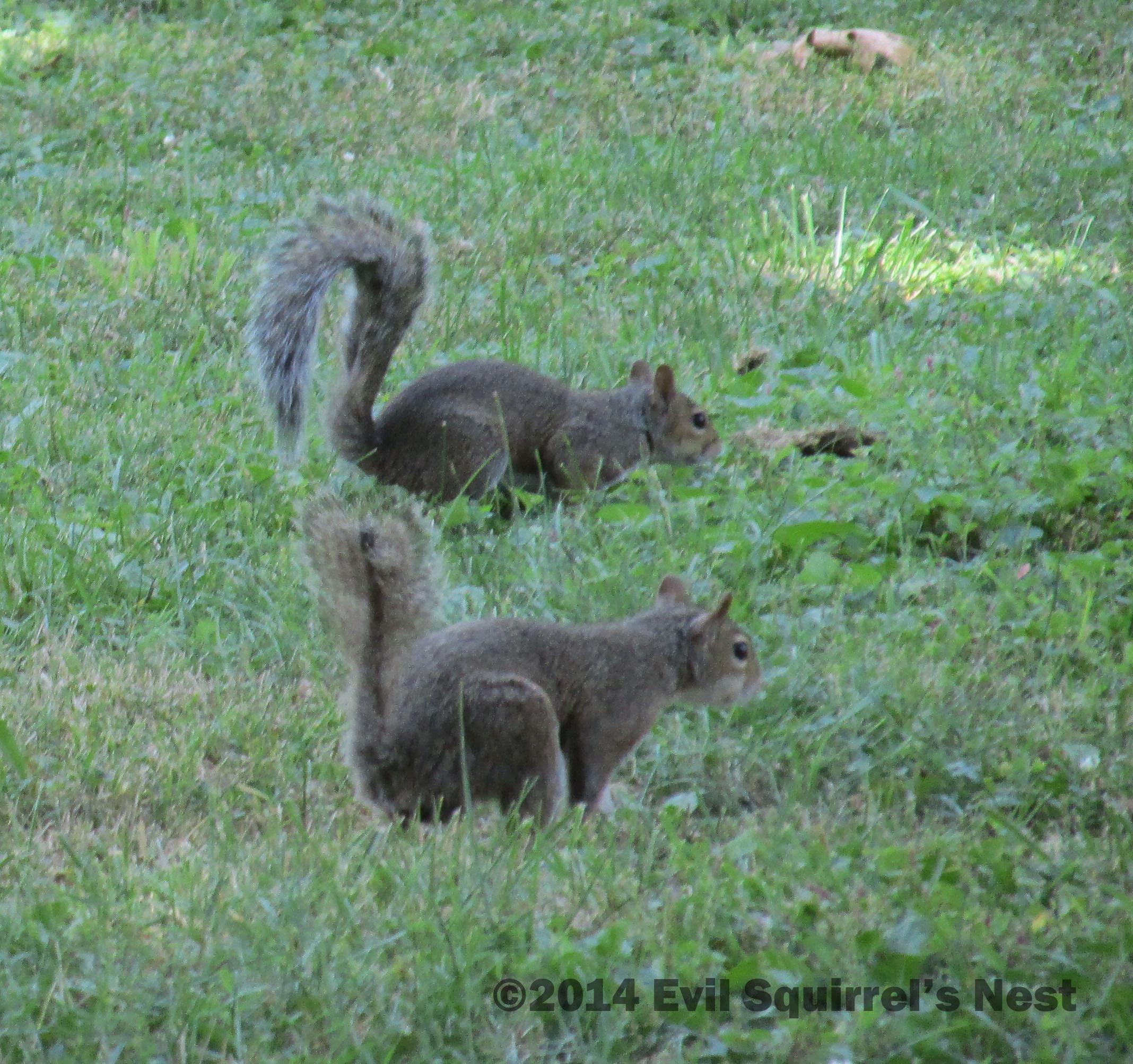 Evil Squirrel With Gun